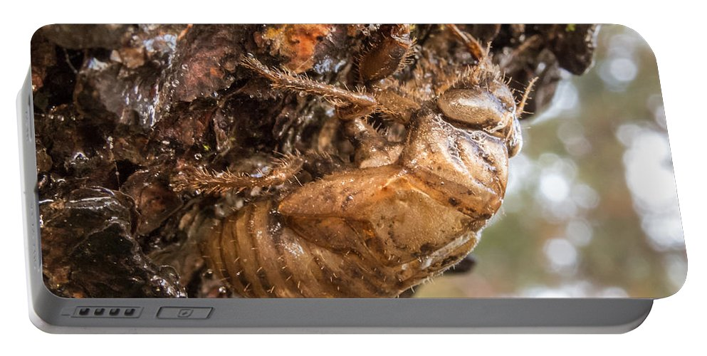 Autumn Portable Battery Charger featuring the photograph Cicada Exoskeleton Side by Deb Fedeler