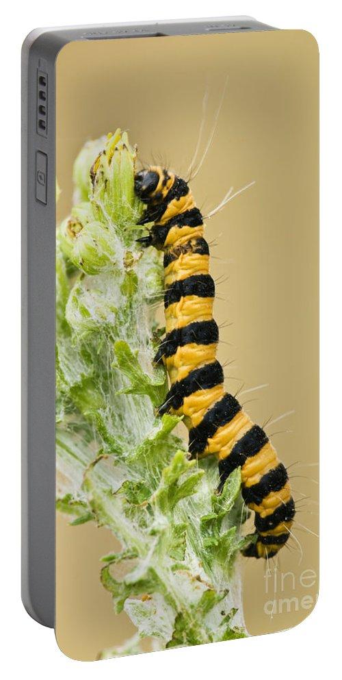 Caterpillar Portable Battery Charger featuring the photograph Cinnabar Moth Caterpillar by Inga Spence