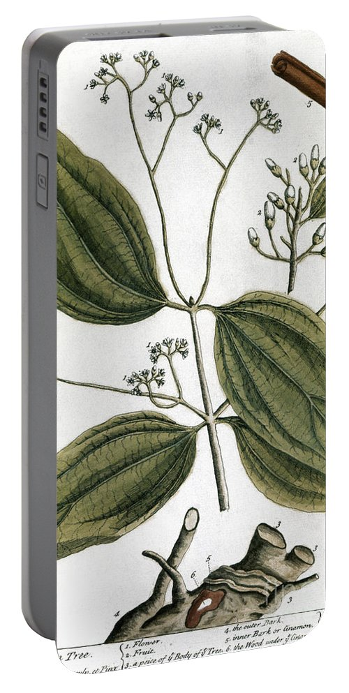 1730s Portable Battery Charger featuring the photograph Cinnamon Tree, 1735 by Granger