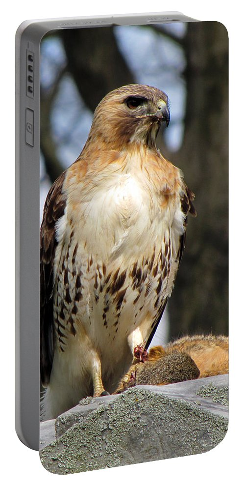 Hawk Portable Battery Charger featuring the photograph Circle Of Life by September Stone
