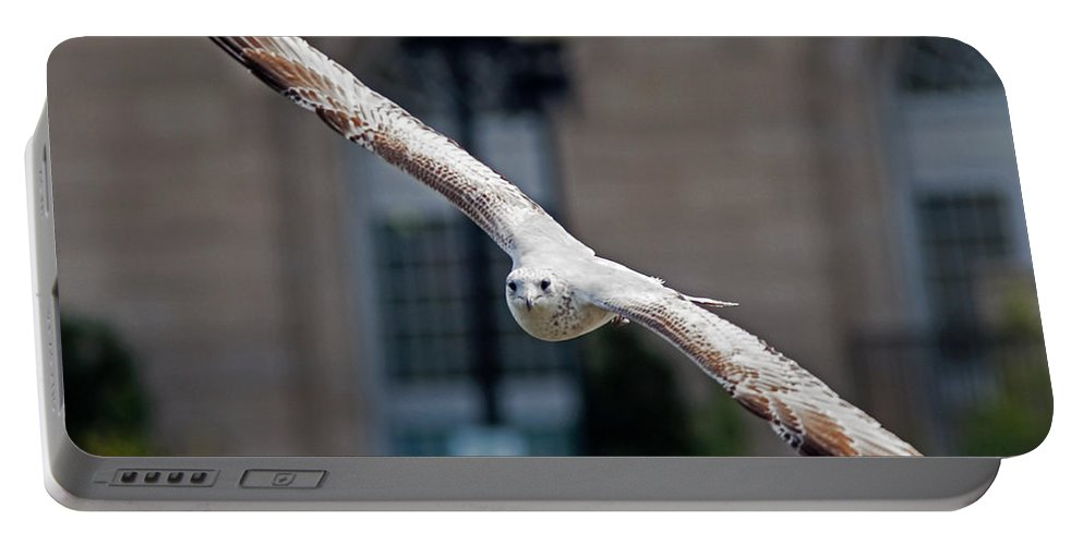 Seagull Portable Battery Charger featuring the photograph City Gull by David Freuthal