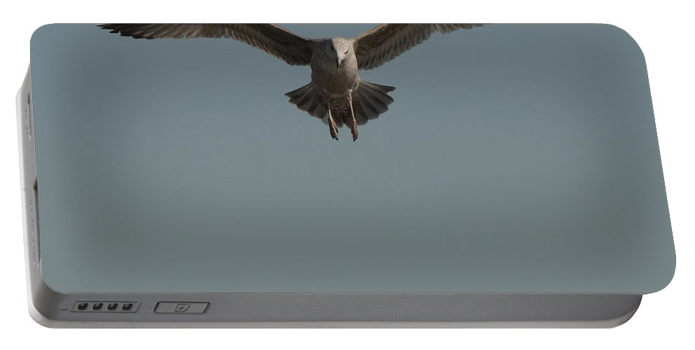 Seagull Portable Battery Charger featuring the photograph Clams For Dinner 2 by Steven Natanson