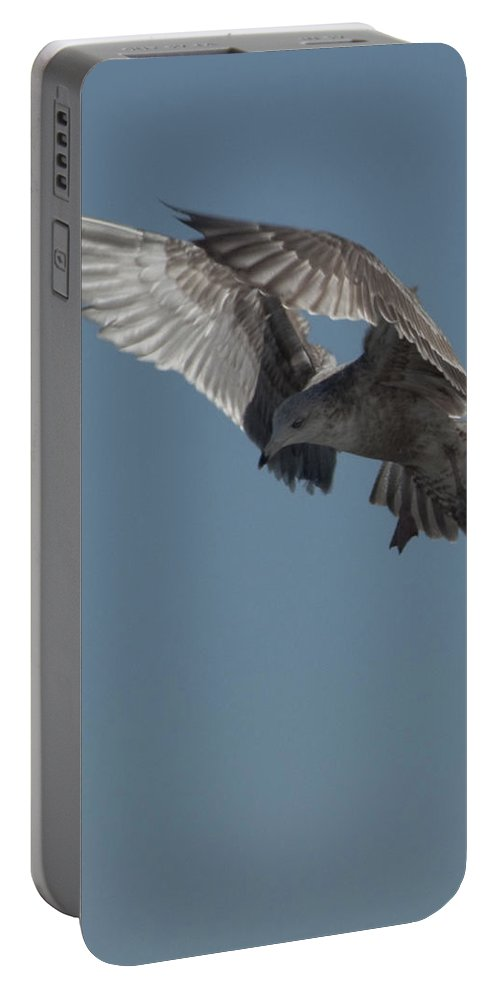 Seagull Portable Battery Charger featuring the photograph Clams For Dinner 3 by Steven Natanson
