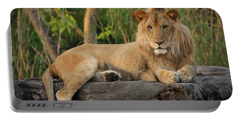 Lion Portable Battery Charger featuring the photograph Classic Young Male by Steven Sparks