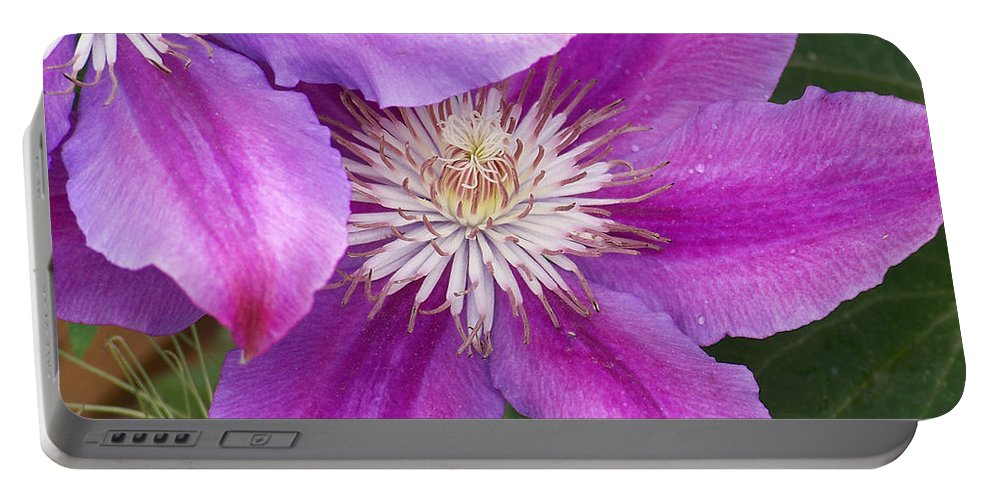Clematis Portable Battery Charger featuring the photograph Clematis Flowers by Ernie Echols