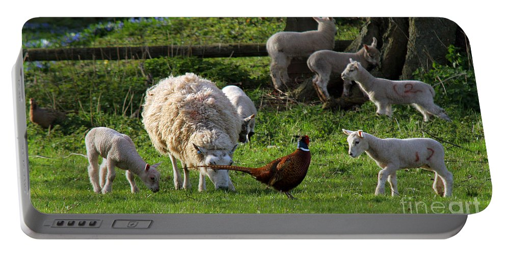 Pheasant Portable Battery Charger featuring the photograph Close Encounter Of The Third Kind by Angel Ciesniarska