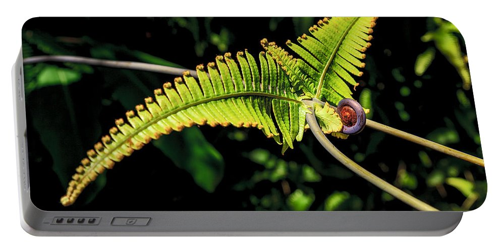 Hawaii Portable Battery Charger featuring the photograph Close Up Of An Uluhe Fern by Nature Photographer