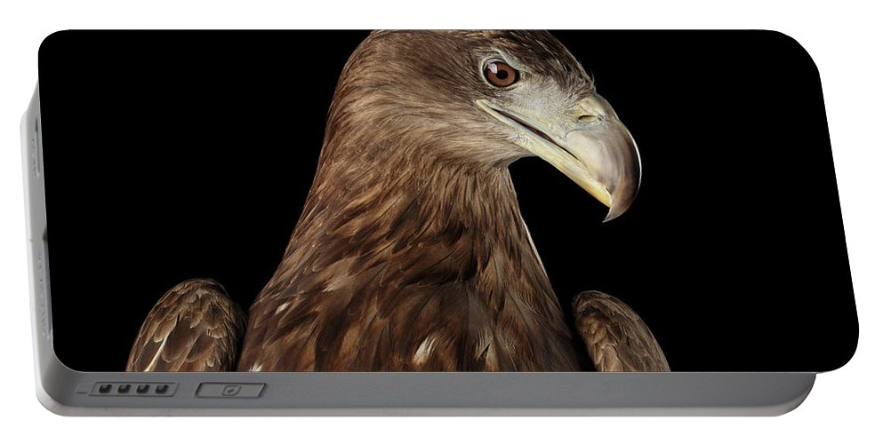 Eagle Portable Battery Charger featuring the photograph Close-up White-tailed Eagle, Birds Of Prey Isolated On Black Bac by Sergey Taran