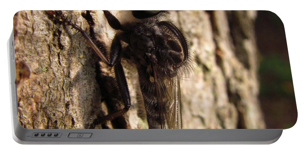 Club Tailed Robber Fly Images Club Tailed Robber Fly Prints Predatory Insects Predatory Fly Prints Entomology Biodiversity Forest Ecology Old Growth Forest Conservation Nature Portable Battery Charger featuring the photograph Club Tailed Robber Fly by Joshua Bales