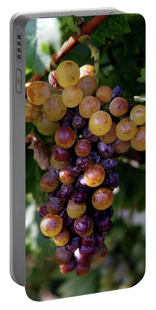 Grape Portable Battery Charger featuring the photograph Cluster Of Ripe Grapes by Amos Dor