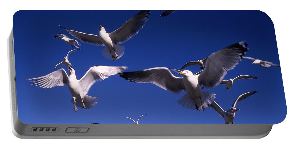 Seagull Birds Flight Portable Battery Charger featuring the photograph Cnrg0302 by Henry Butz