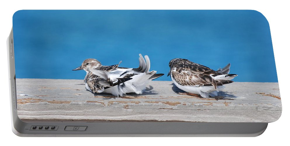 Bird Portable Battery Charger featuring the photograph Cold Birds by Rob Hans