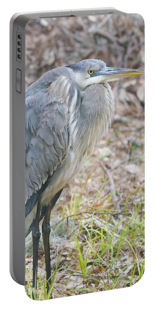 Bird Portable Battery Charger featuring the photograph Cold Blue Heron by Phill Doherty