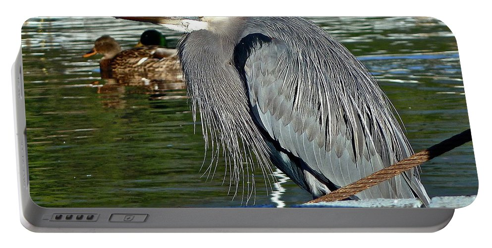 Birds Portable Battery Charger featuring the photograph Cold Morning by Diana Hatcher