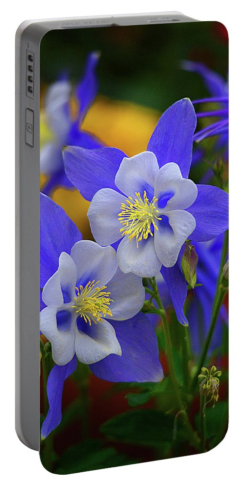 Columbine Portable Battery Charger featuring the photograph Colorado Columbine by Lynn Bauer