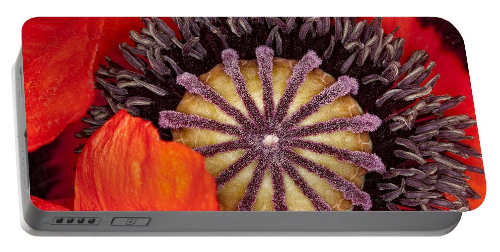 Flower Portable Battery Charger featuring the photograph Colorful Bloom by Janet Fikar