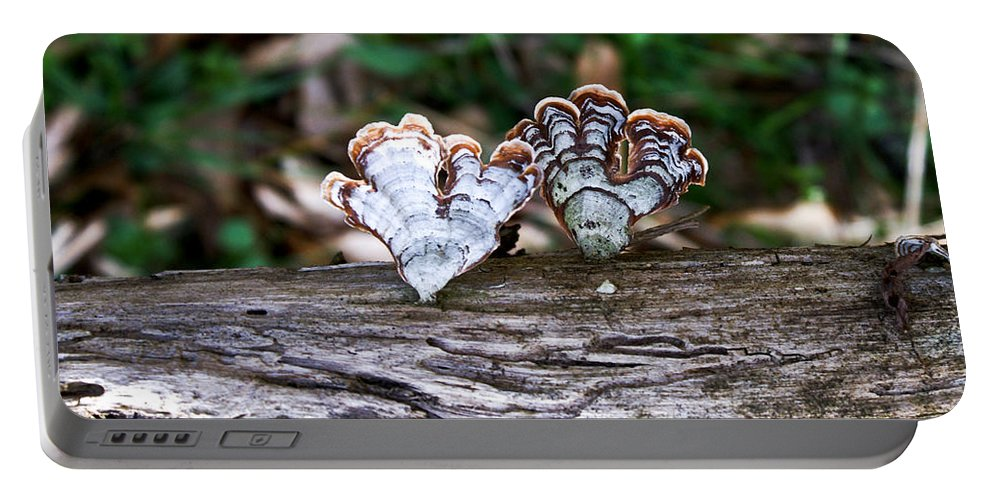 Colorful Portable Battery Charger featuring the photograph Colorful Bracket Fungi by Douglas Barnett