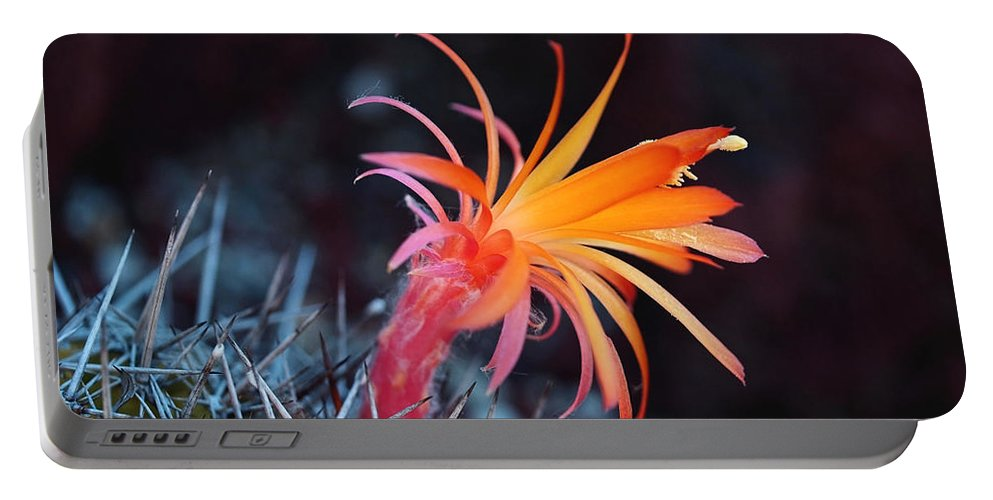 Cactus Portable Battery Charger featuring the photograph Colorful Cactus Flower by Rona Black
