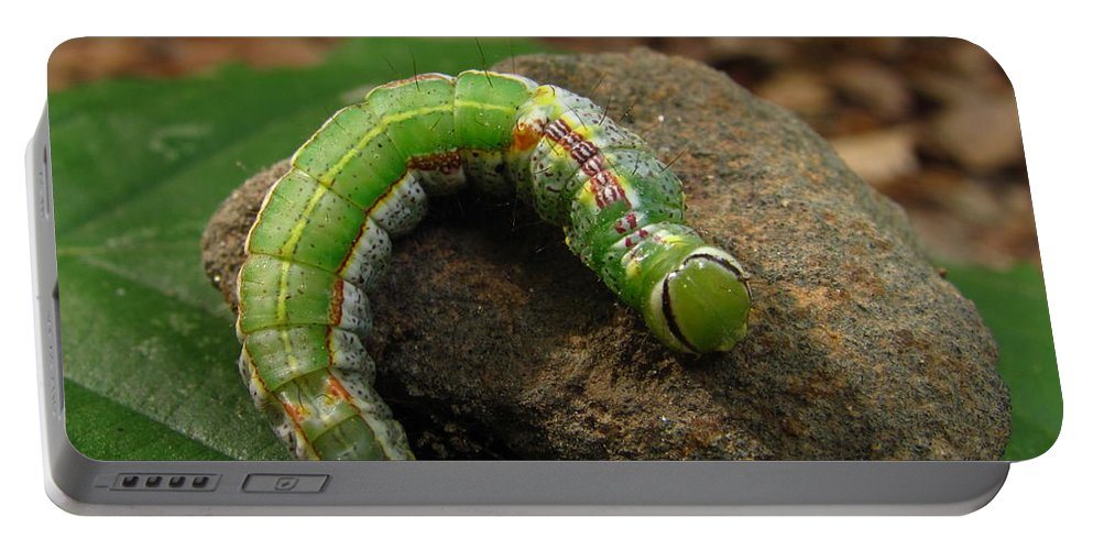 Colorful Caterpillar Images Colorful Caterpillar Prints Unidentified Caterpillar Images Unidentified Caterpillar Prints Forest Ecology Entomology Biodiversity Nature Oldgrowth Forest Preservation Beech Trees Portable Battery Charger featuring the photograph Colorful Caterpillar by Joshua Bales