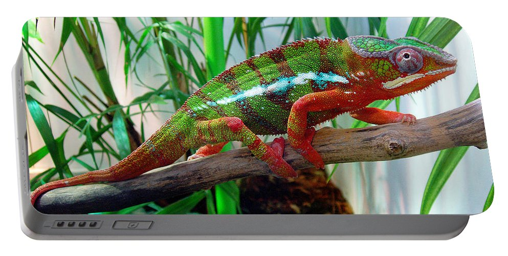 Chameleon Portable Battery Charger featuring the photograph Colorful Chameleon by Nancy Mueller