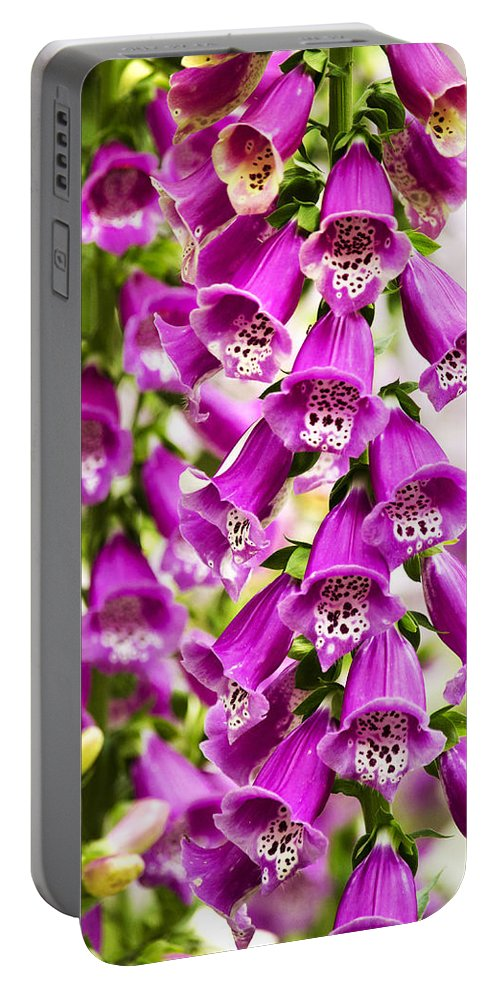 Colorful Portable Battery Charger featuring the photograph Colorful Foxglove Flowers by Christina Rollo