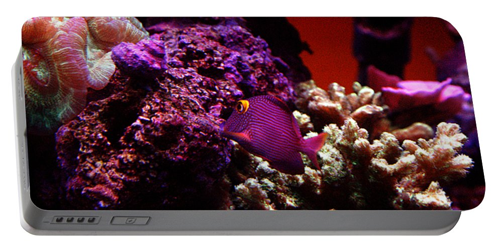 All Rights Reserved Portable Battery Charger featuring the photograph Colors Of Underwater Life by Clayton Bruster