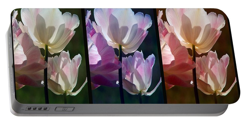 Coloured Tulips Portable Battery Charger featuring the photograph Coloured Tulips by Robert Meanor