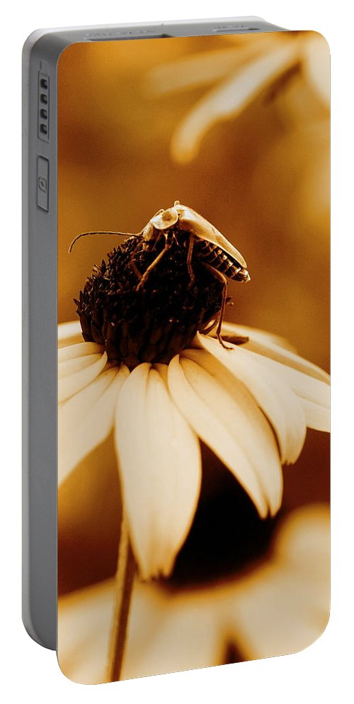 Black Eyed Susan Portable Battery Charger featuring the photograph Comfortably Perched by Angela Rath