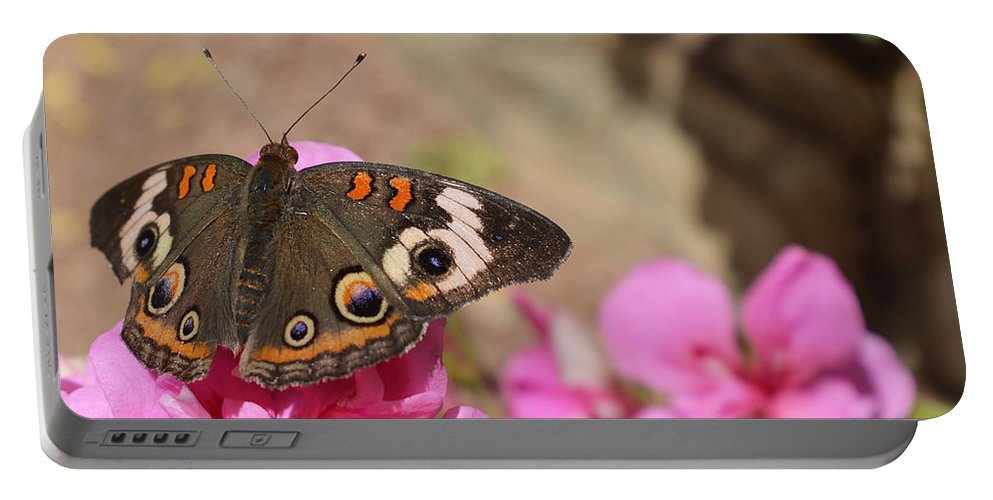 Butterfly Portable Battery Charger featuring the photograph Common Buckeye Butterfly by Aimee L Maher ALM GALLERY