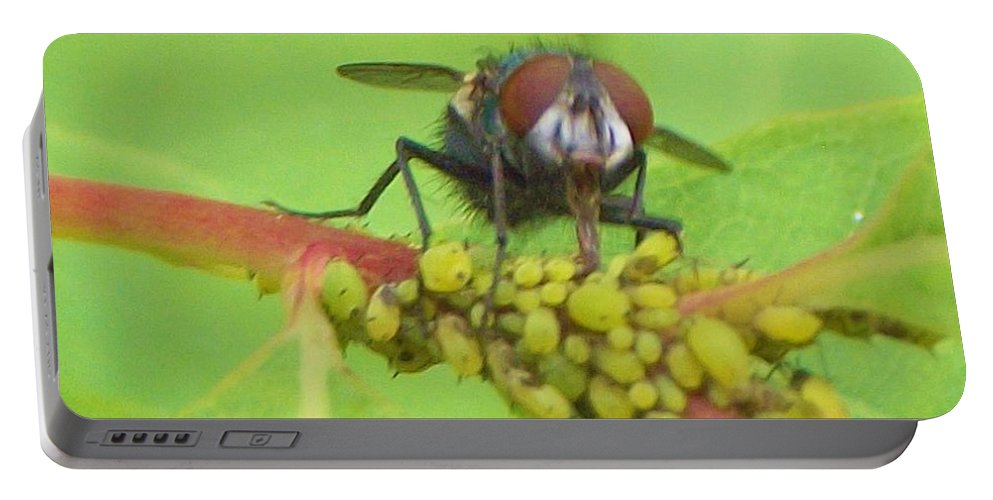 Insect Portable Battery Charger featuring the photograph Common Fly Licking Up Aphid Nectar   May     Indiana  by Rory Cubel
