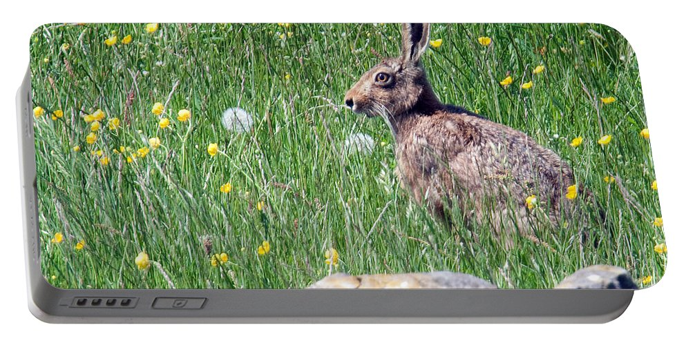 Hare Portable Battery Charger featuring the photograph Common Hare by Bob Kemp