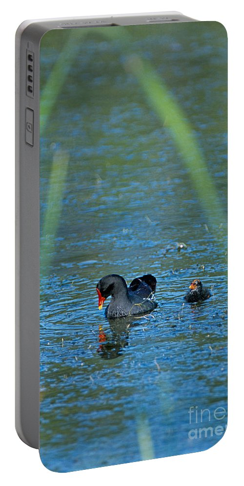 Moorhen Portable Battery Charger featuring the photograph Common Moorhen And Her Baby by John Harmon