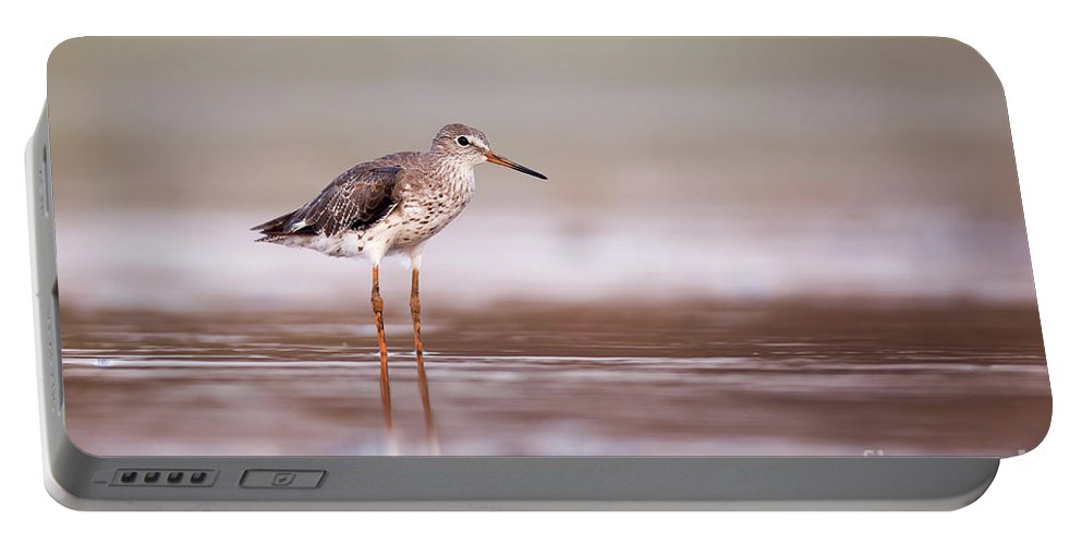 Common Redshank Portable Battery Charger featuring the photograph Common Redshank Tringa Totanus by Alon Meir