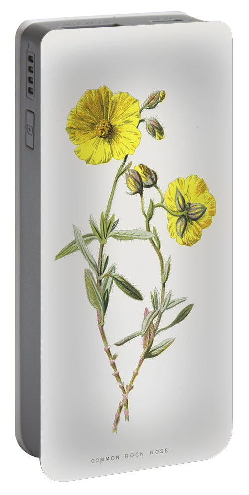 Flowering Portable Battery Charger featuring the painting Common Rock Rose by Frederick Edward Hulme