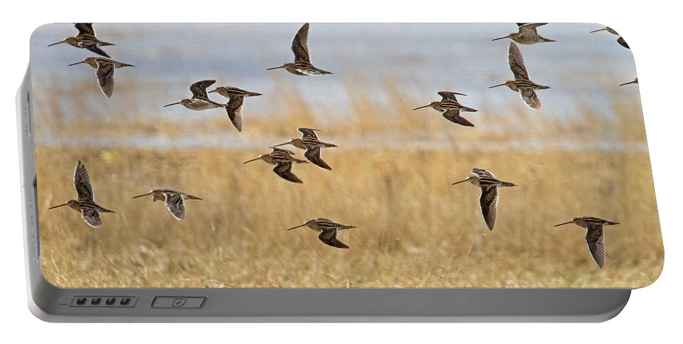 Snipe Portable Battery Charger featuring the photograph Common Snipe by Bob Kemp