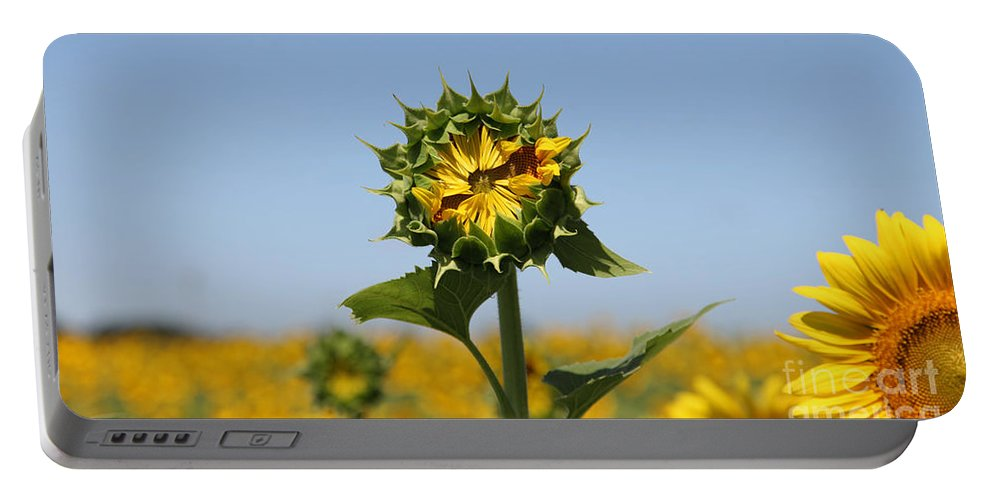 Sunflowers Portable Battery Charger featuring the photograph Competition by Amanda Barcon