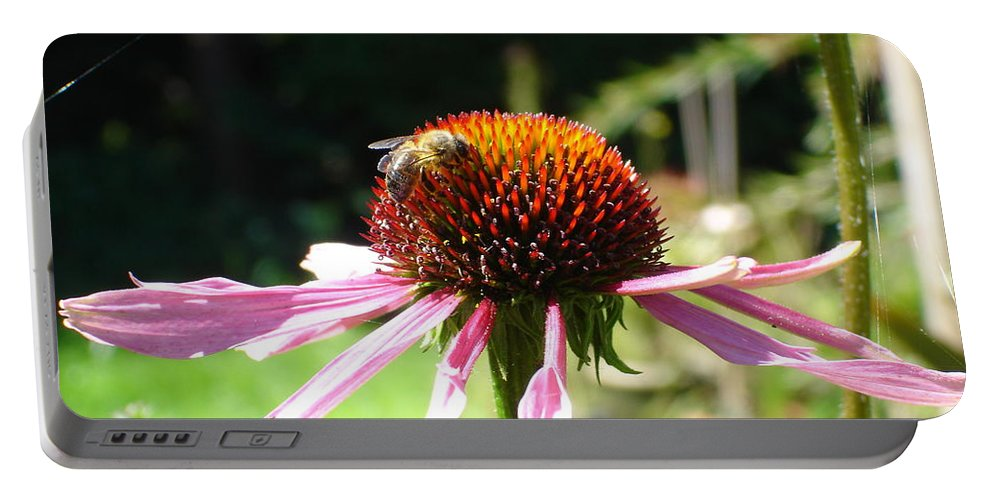 Flowers Portable Battery Charger featuring the photograph Cone Flower And Honey Bee by Susan Baker