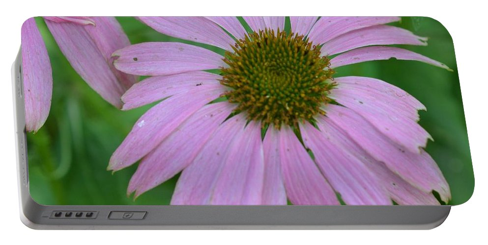 Flowers Portable Battery Charger featuring the photograph Coneflower by Charles HALL