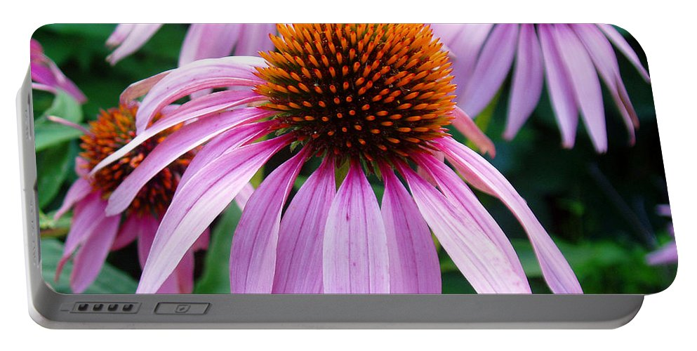 Coneflowers Portable Battery Charger featuring the photograph Three Coneflowers by Nancy Mueller