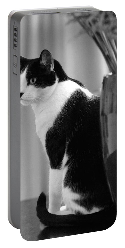 Black And White Portable Battery Charger featuring the photograph Contemplative Cat Black And White by Jill Reger
