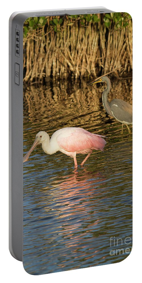 Cutts Nature Photography Portable Battery Charger featuring the photograph Contrasting Colors by David Cutts