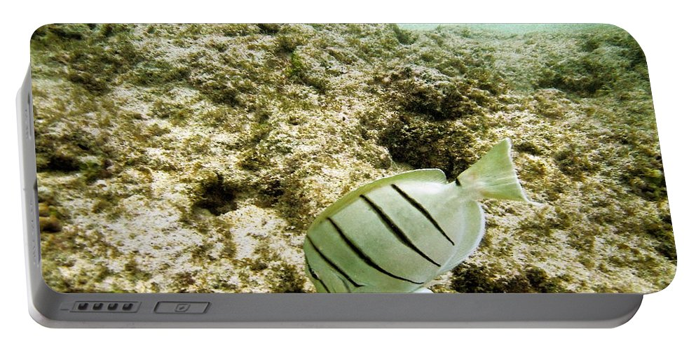 Hanauma Bay Portable Battery Charger featuring the photograph Convict Tang by Michael Peychich