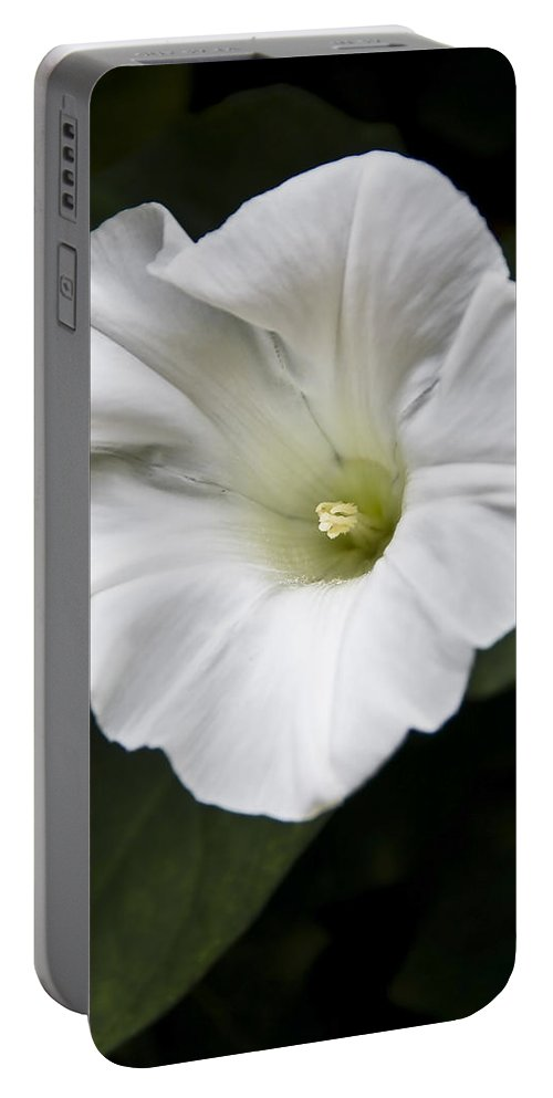 Flowers Portable Battery Charger featuring the photograph Convolvulus by Svetlana Sewell