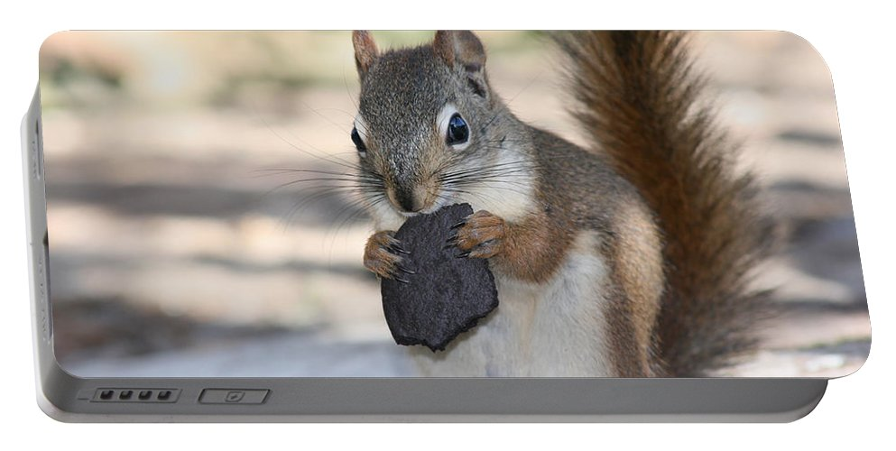 Cookie Squirrell Nature Wild Animal Chocolate Food Camping Outdoors Portable Battery Charger featuring the photograph Cookie Monster by Andrea Lawrence