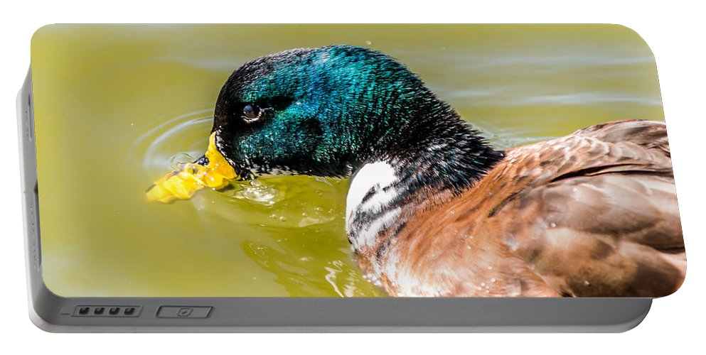 Duck Portable Battery Charger featuring the photograph Cool Off The Bill by Leticia Latocki