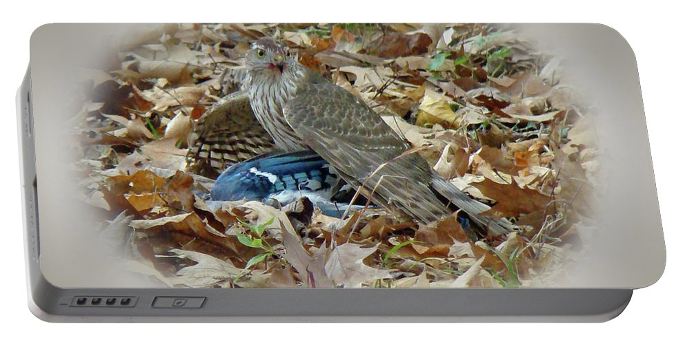 Hawk Portable Battery Charger featuring the photograph Cooper's Hawk - Accipiter Cooperii - With Blue Jay by Mother Nature