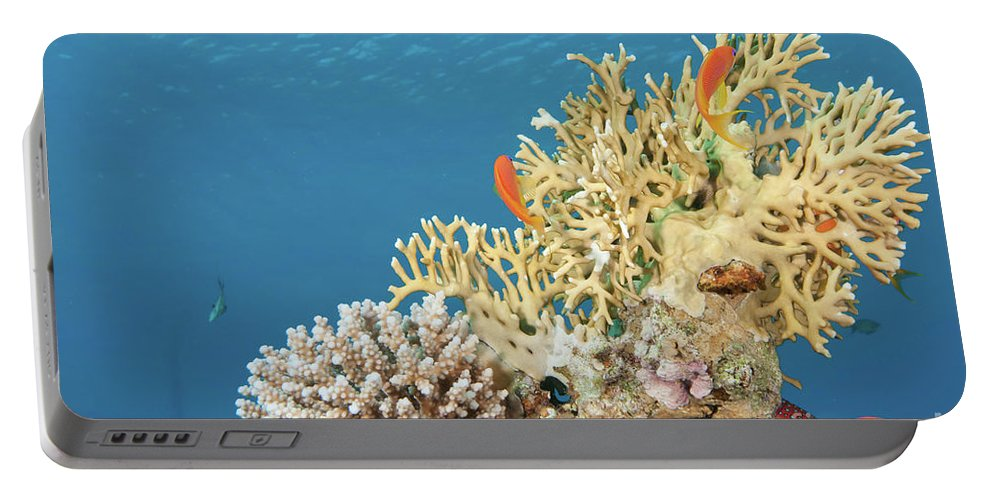 Eco System Portable Battery Charger featuring the photograph Coral Reef Eco System by Hagai Nativ