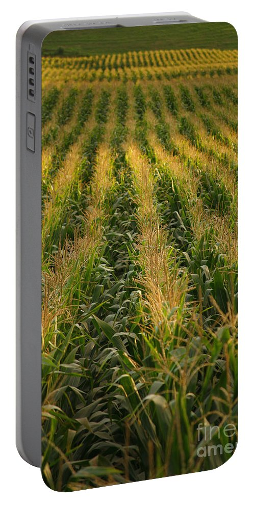 Acores Portable Battery Charger featuring the photograph Corn Field by Gaspar Avila