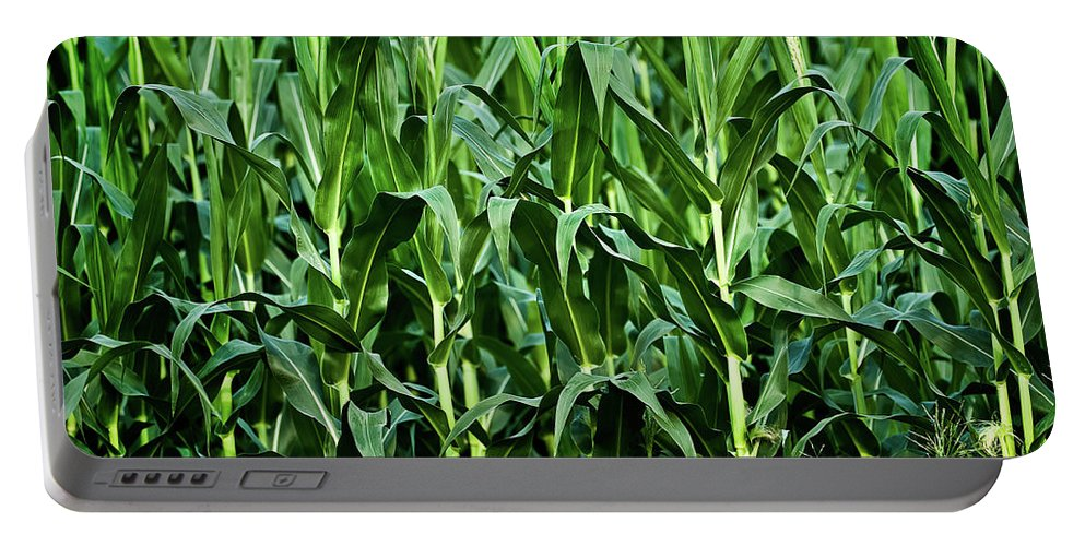 Corn Portable Battery Charger featuring the photograph Corn Field's First Row by Onyonet Photo Studios