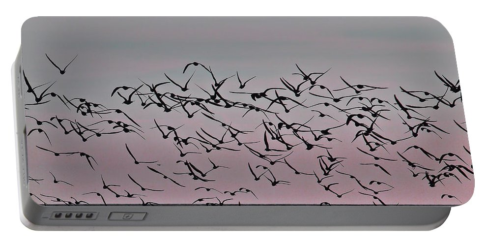 Birds Portable Battery Charger featuring the photograph Costa Rica 045 by Howard Stapleton